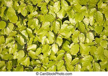 Landscape - Green Hedge