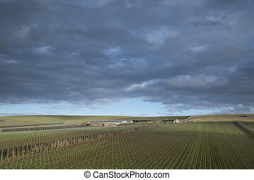 Landscape image of vineyard in English countryside scene with dramatic sky and clouds
