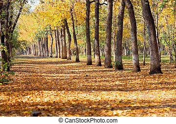 landscape in autumn park