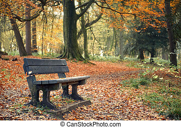 Landscape in autumn park with bench