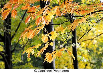Landscape in autumn season