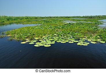 Landscape in Danube delta, Romania