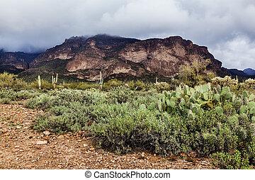 Landscape in desert of Arizona, USA