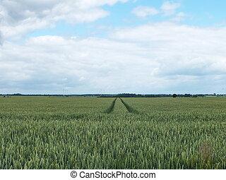landscape in Mecklenburg-Western Pomerania, Germany