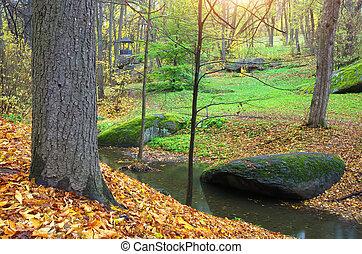 Landscape in park.