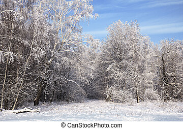 landscape in snow against blue sky. Winter scene.