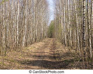landscape in spring forest