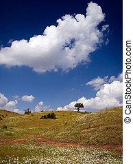 landscape in spring