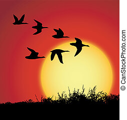 sunset - landscape in sunset with silhouette birds