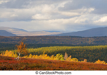 Landscape in Sweden in the autumn.