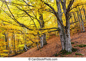 Landscape in the autumn golden forest
