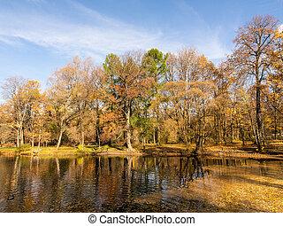 landscape in the autumn park