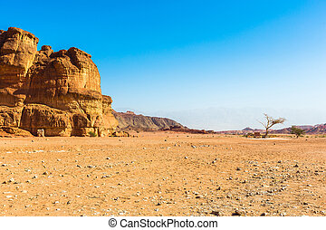 landscape in the desert