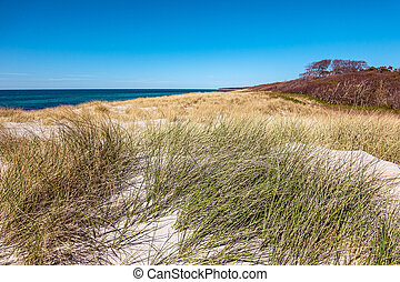 Landscape in the dunes on the Baltic Sea coast in Germany