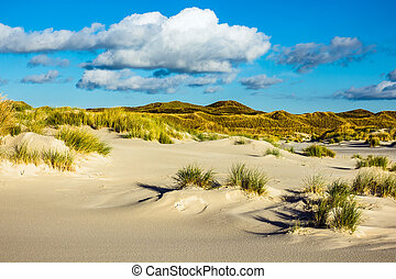 Landscape in the dunes on the North Sea island Amrum, Germany