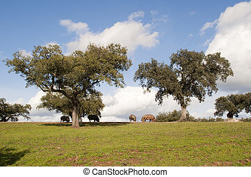 landscape in the field with pigs