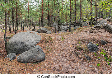 Landscape in the forest