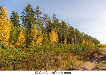 forest on a sunny autumn day