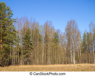 forest on a sunny day in spring