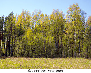 forest on a sunny spring day