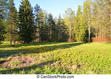 Landscape in the park in spring.