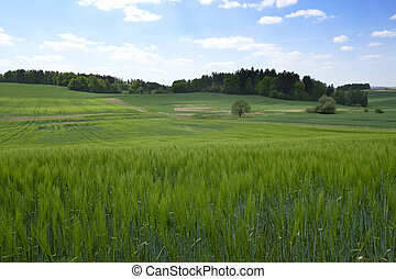 Landscape in the south of Czech Republic