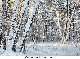Landscape in the winter cold forest