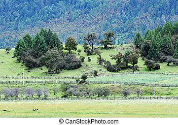 Landscape in Tibet - Landscape of mountains and grassland in...