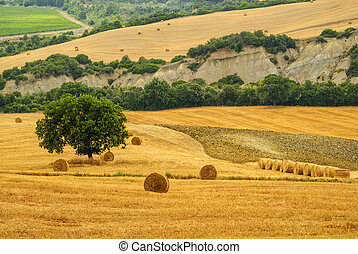 Landscape near Seggiano (Grosseto, Tuscany, Italy) at summer. Hills and fields