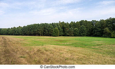 landscape, in, zomer
