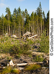 Logging clearcutting practice leaves forest looking barren right by the road.