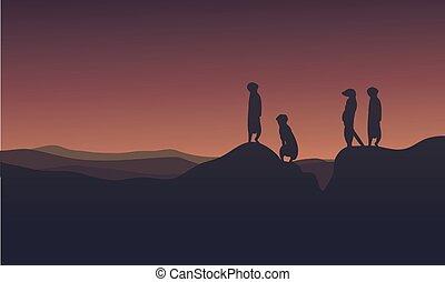 Landscape meerkat at afternoon