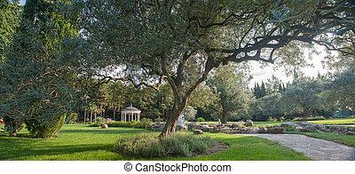 landscape, met, een, olijf boom