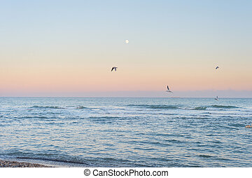 Landscape moon sea seagullstwilight