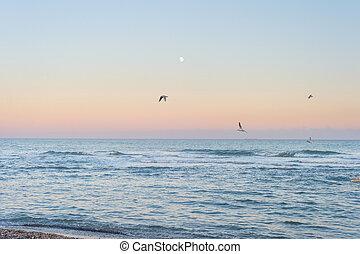 Landscape moon sea seagullstwilight