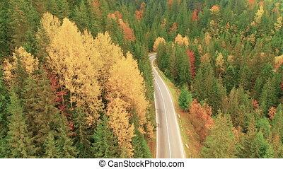 Mountain asphalt road through autumn forest, landscape, drone view.
