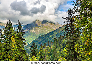 landscape mountains with forest
