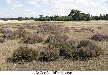 Landscape in National Park Hoge Veluwe in the Netherlands.