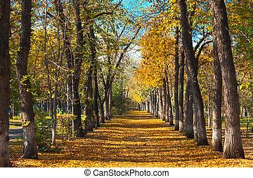 landscape nature autumn park