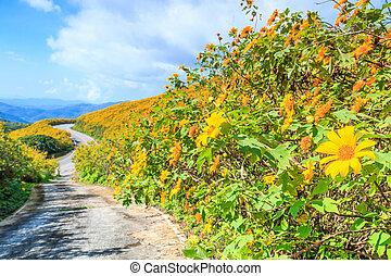 landscape nature flower (mexican sunflower) in Maehongson...