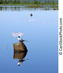 Landscape nature. Two birds sitting on a tree stump sticking out