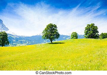 Landscape near Alps in summer