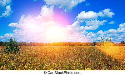 Landscape of a green field under a bubbly summer colorful sky at sunset dawn sunrise. Copyspace On Clear Sky.