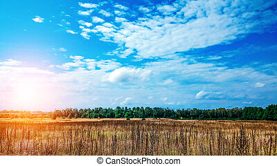 Landscape of a green field under a bubbly summer colorful sky at sunset dawn sunrise. Copyspace Clear Sky.