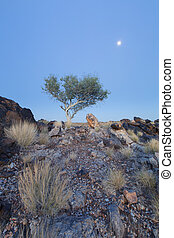 Landscape of a lone tree with white trunk and moon in dry desert