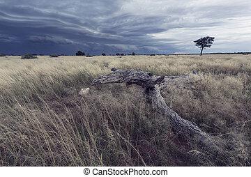 Landscape of a rain storm approaching over Kalahari grass