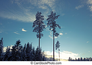 Landscape of a silhouette forest trees with blue sky and clouds