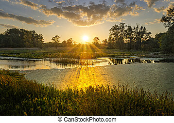 Landscape of a sunset on a summer pond.