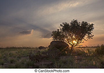 Landscape of a tree on a hill with rocks and clouds at sunset