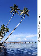 Landscape of a tropical beach in Vanua Levu Island Fiji